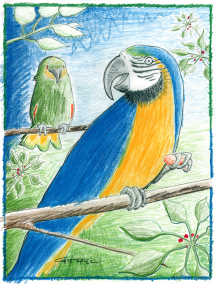 birds1web